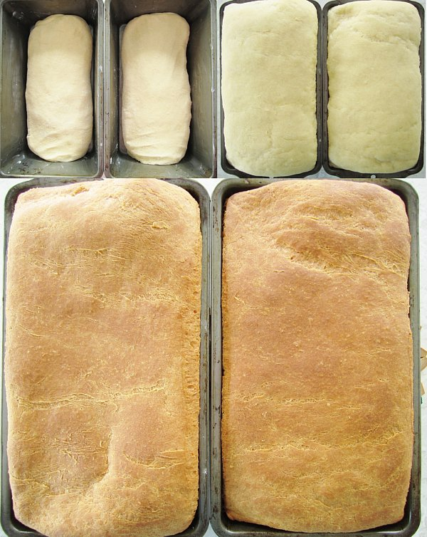 In process photos of brioche dough in pans before rising, after rising, and after baking