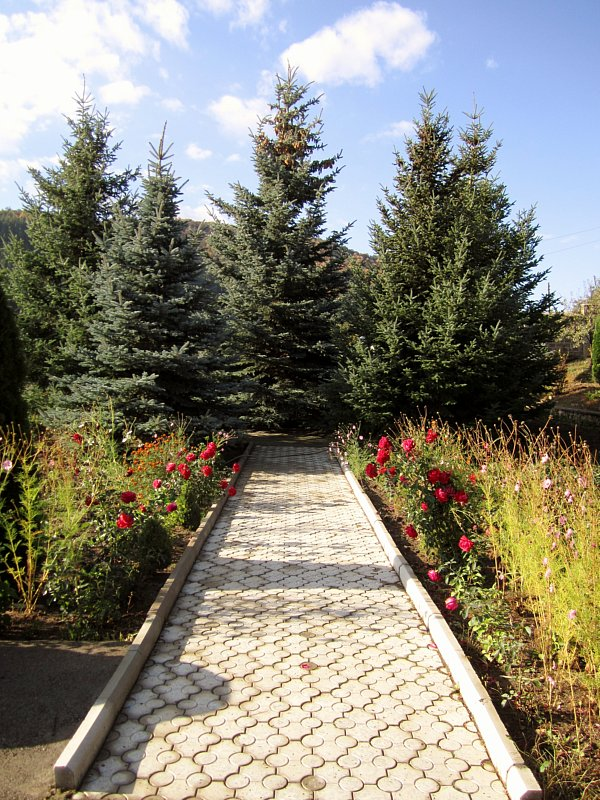 A stone path with plants on either side and evergreen trees at the end of it