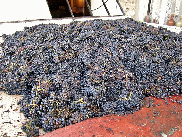 piles of grapes covering a large surface