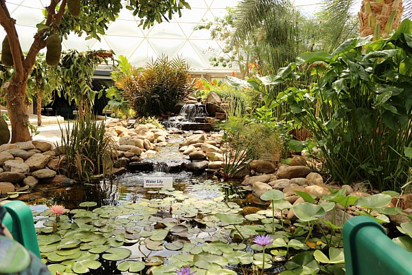 a swampy area with lily pads and other plants