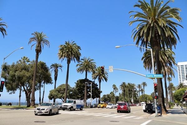 A palm tree lined street