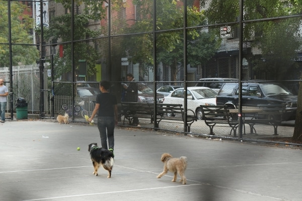 two dogs on a blacktop surface