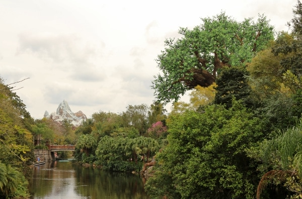 a view of Expedition Everest and the Tree of Life in Disney\'s Animal Kingdom park