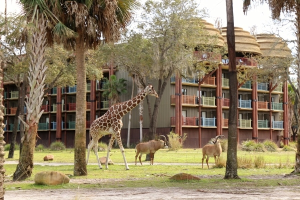 A group of zoo animals grazing in front of a building