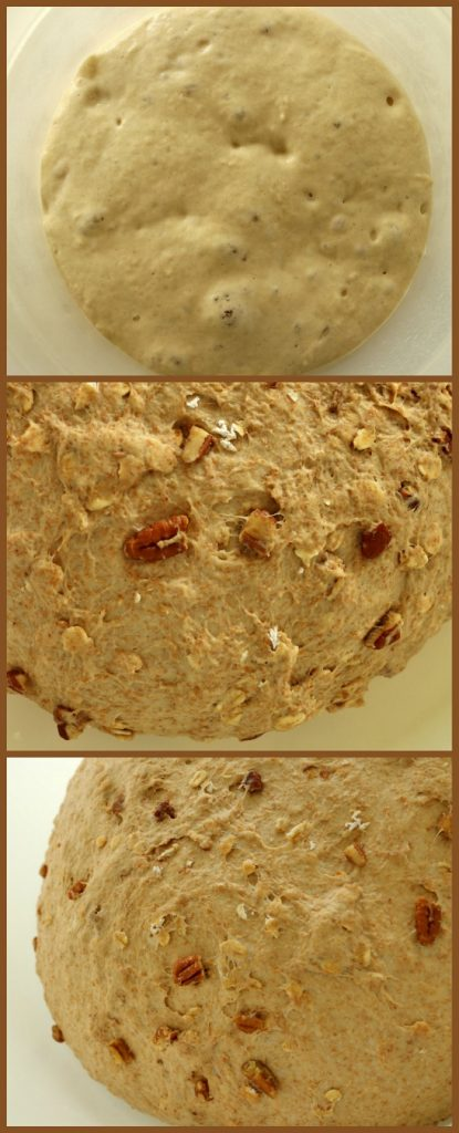 step by step photos of bread dough rising