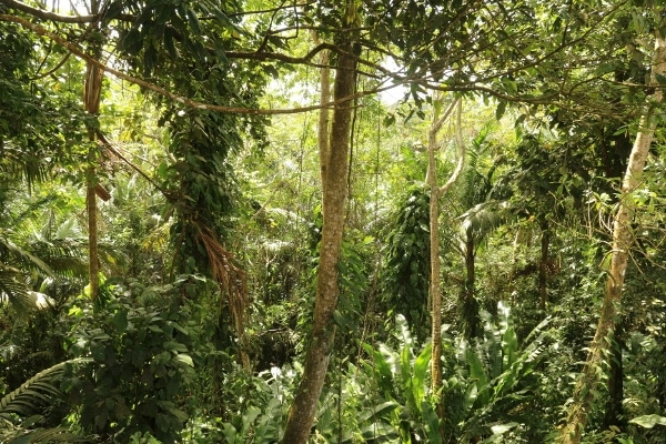 Trees in a jungle