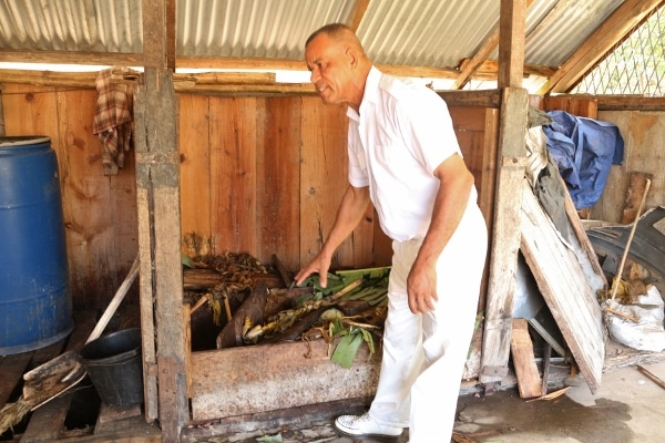 A man pointing at a pile of banana leaves