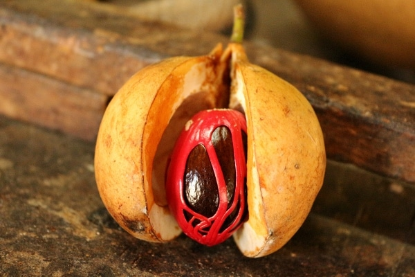 A close up of a nutmeg fruit cut open to show the inside