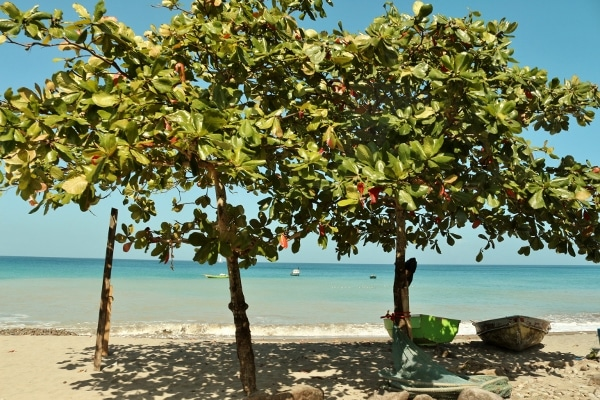 A group of almond trees on a tropical beach