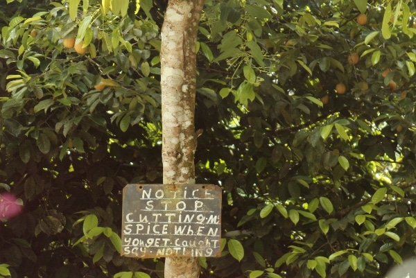 A sign hanging from a tree