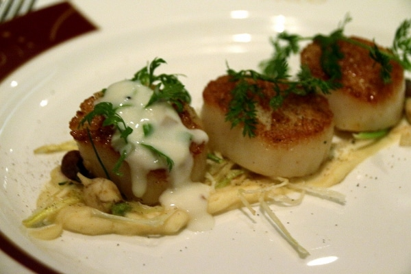 closeup of seared scallops with a creamy sauce drizzled over top
