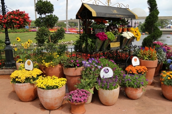 a colorful flower display