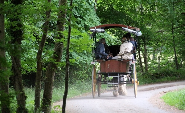 a horse-drawn buggy driving through the forest