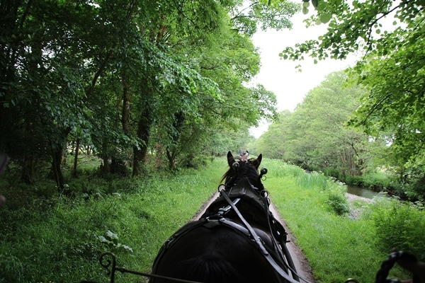 view of a horse going through the forest