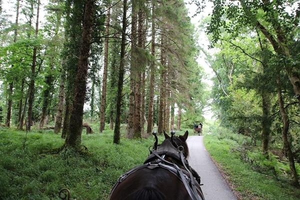 view from behind a horse walking in a forest