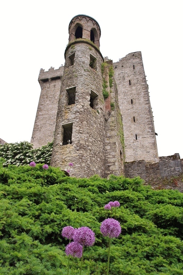 Blarney Castle with purple flowers in front