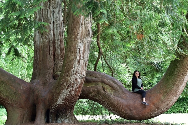 a person sitting on a large branch on a tree