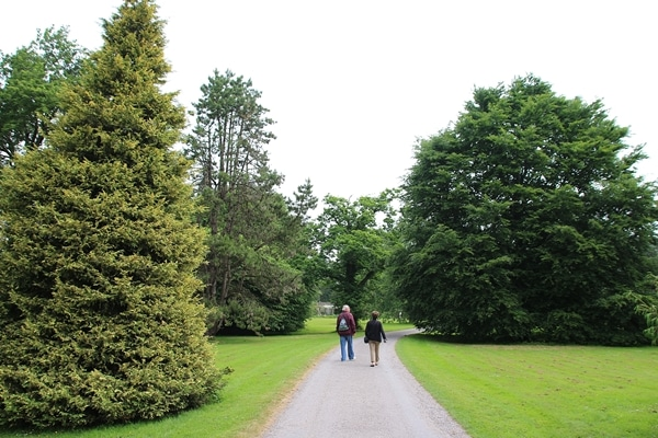 people walking down a path lined with trees
