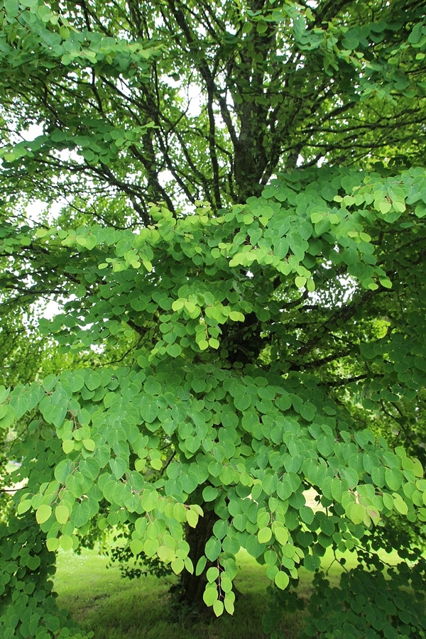 closeup of leaves on a tree