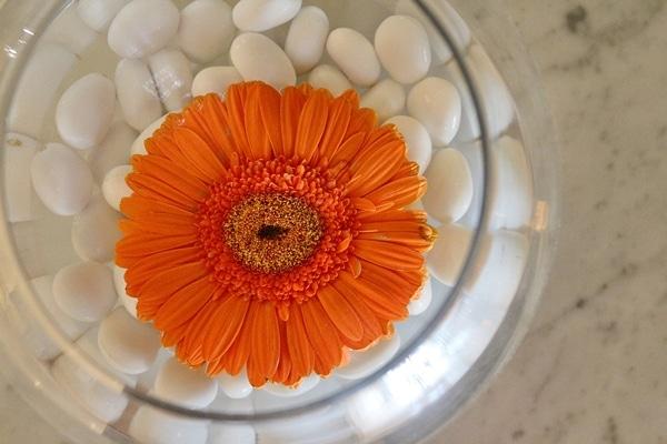 an orange gerbera daisy floating in water