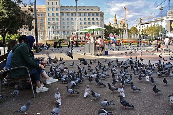 lots of pigeons in a city square
