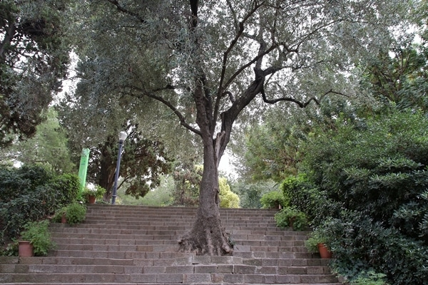 A tree growing through stone steps