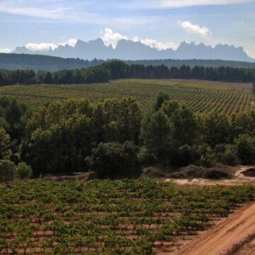 Oller del Mas vineyard in Spain