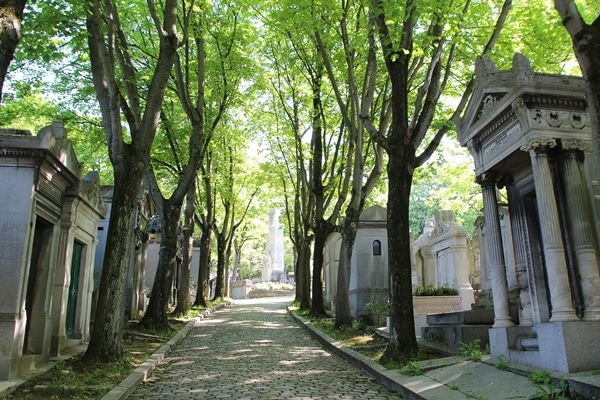 a tree-lined walkway in a cemetery