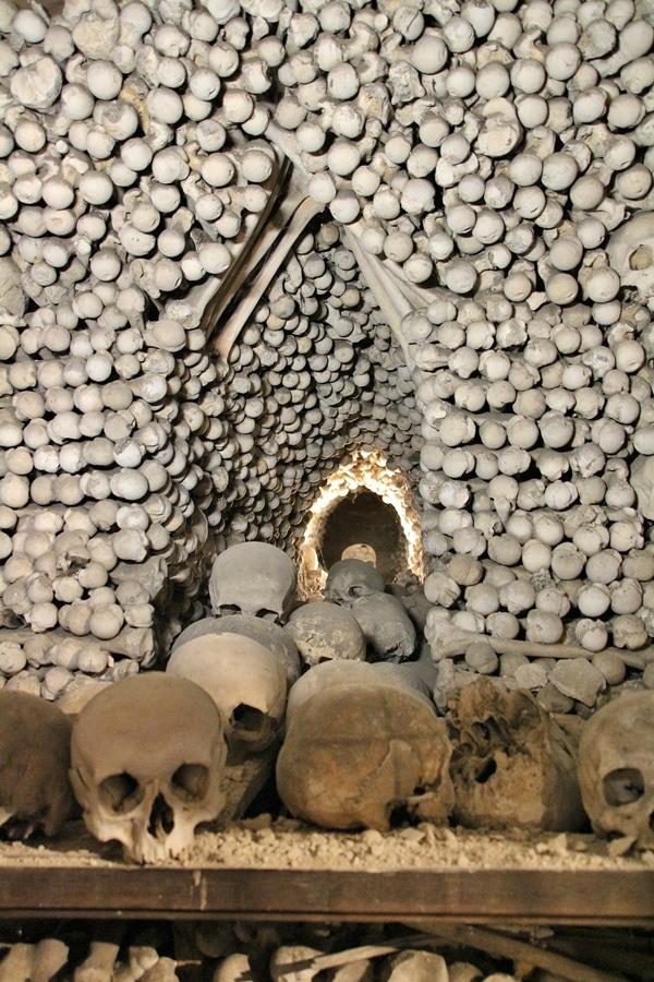 A close up of human bones