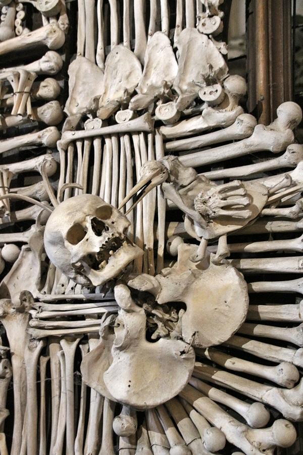 closeup of human bones on a family shield