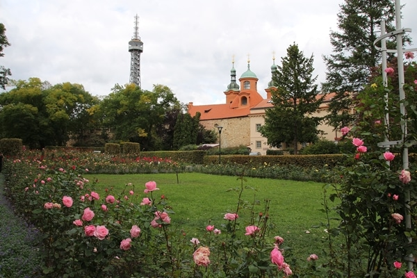 A close up of a flower garden with buildings in the distance