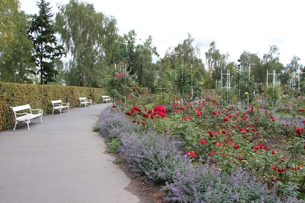 a flower garden with a walking path to the left