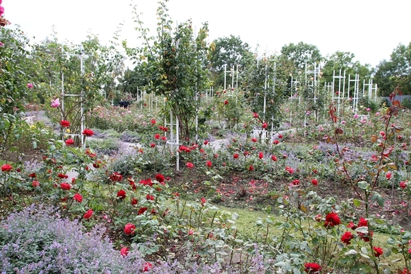 A colorful flower garden
