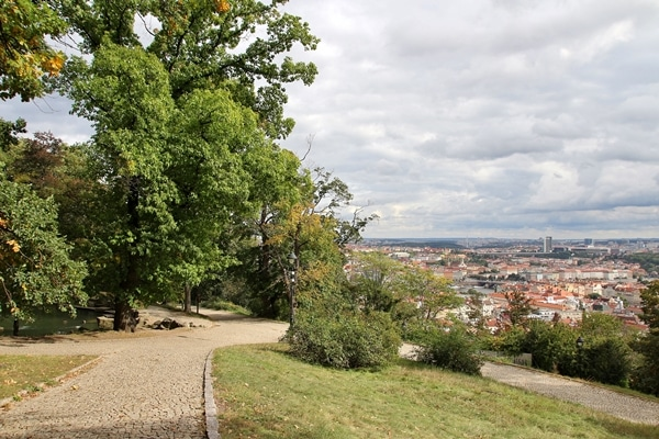 A path with buildings on the side of a tree