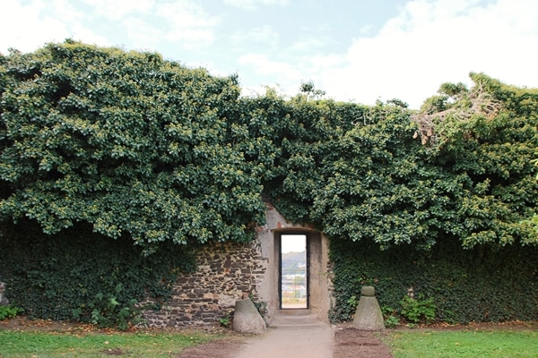 a wall with an opening and ivy growing all over it