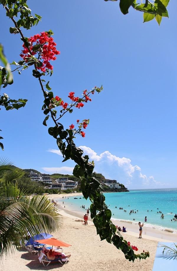 colorful tropical flowers on a Caribbean beach