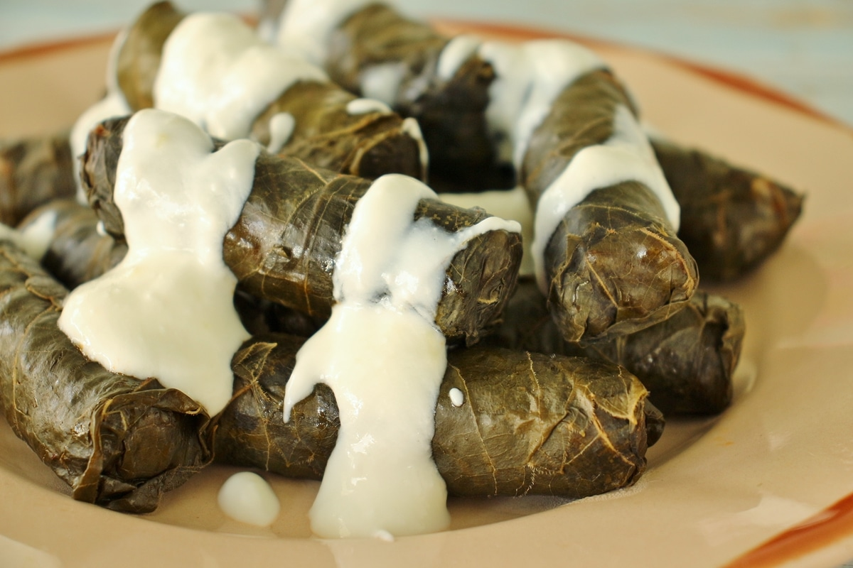 Dolma (grape leaves) drizzled with yogurt and garlic sauce on an antique pink plate