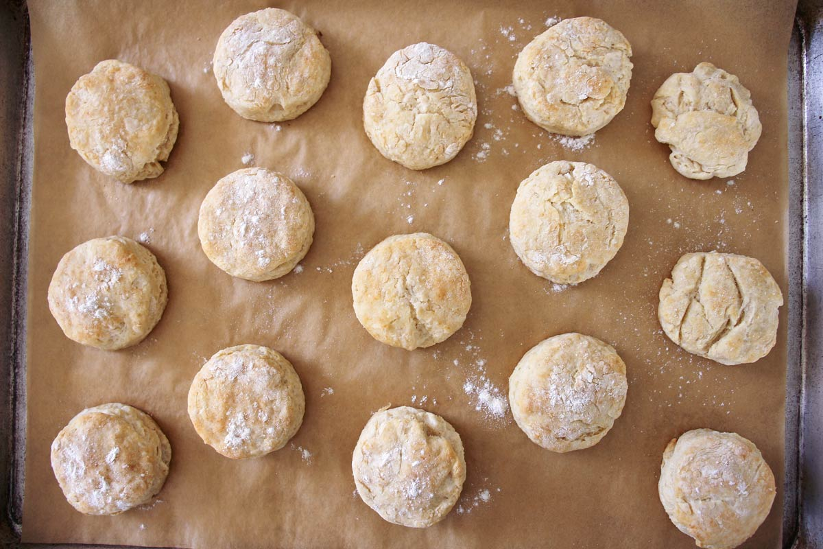 a tray of baked round scones